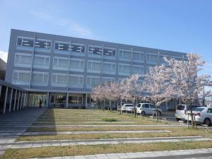 桜が綺麗です。